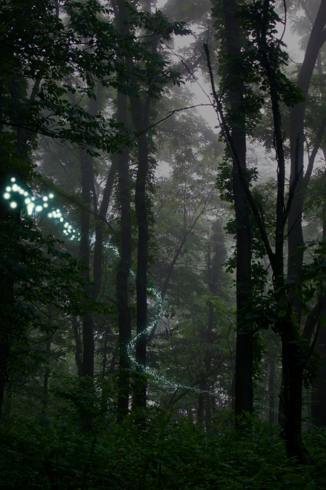 Pixie Trail 2